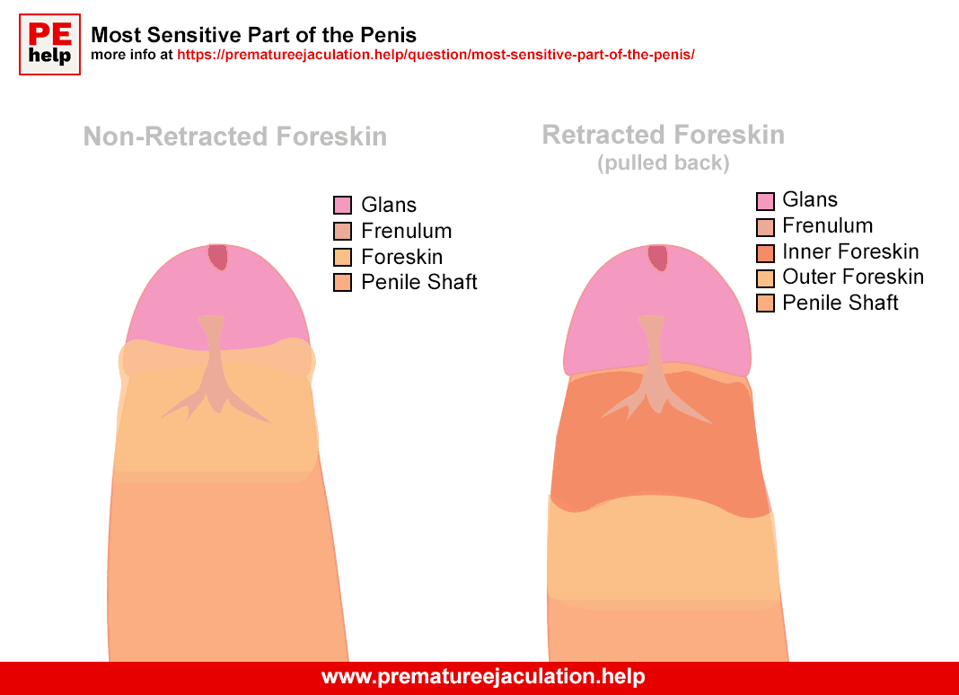 Most sensitive part of the penis